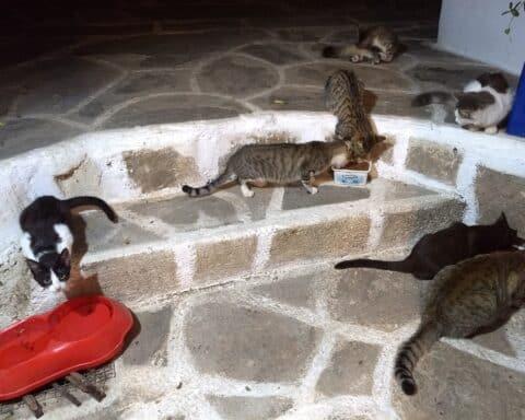 Ήρθε μπόλικη τροφή, περιμένουν κτηνιάτρους τα αδέσποτα της Σικίνου