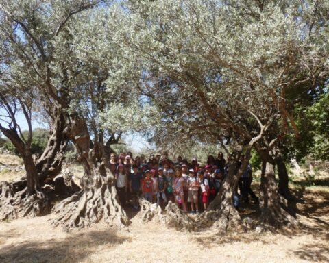 Την ανάδειξη και προστασίατων αιωνόβιων ελαιοδέντρων θα επιδιώξει η Περιφέρεια